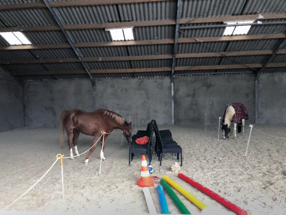 co trainer paardencoaching kinderen